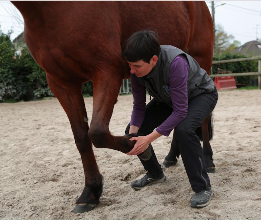 mmv cheval boulet